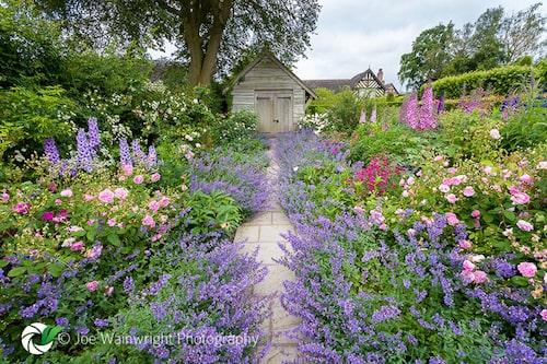 Englandresa – besök i Wollerton Old Hall. Underbara perenna rabatter med rosor.