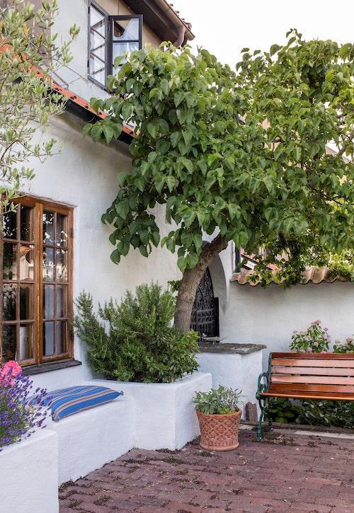 Ett favorithörn. Trädgårdsdesignern Peter Englander har skapat medelhavskänsla utanför det stora huset med en murad upphöjd bädd som bjuder på sittplats, kryddträdgård och ett ståtligt mullbärsträd. Bänk från Byarums bruk.