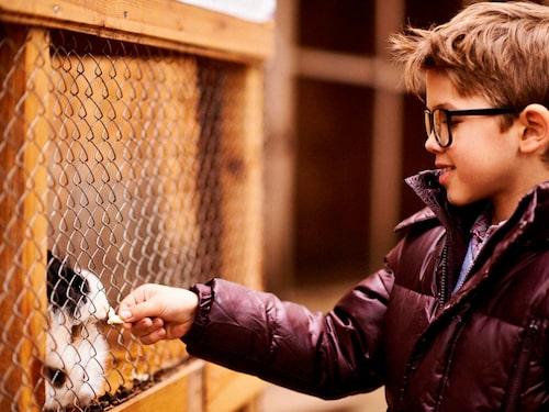 Besök en 4H-gård på jullovet, perfekt för familjer som gillar djur och utelek.