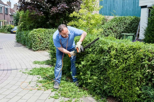 Lägg ut en presenning innan du klipper häcken, så blir det enklare att samla ihop klippet.