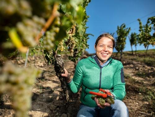 Kathrin Puff är vinmakare på Kloster Eberbach som gör främst rieslingviner i Rheingau Tyskland.
