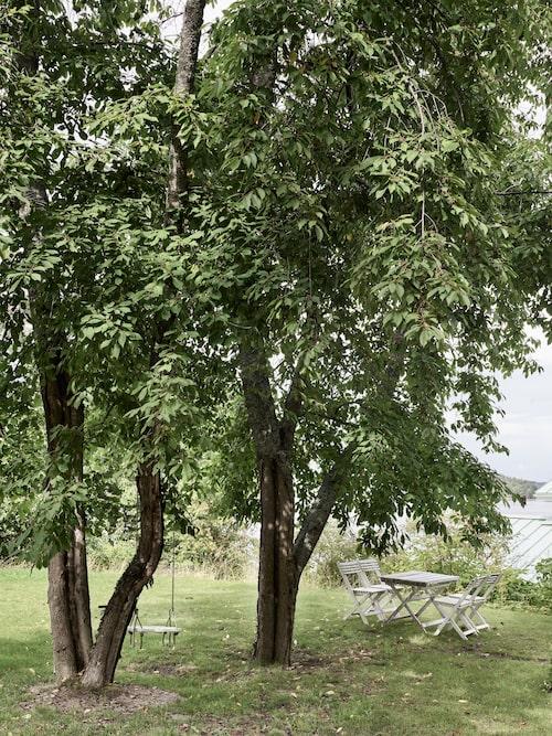 På tomten där paret byggde sitt hus låg tidigare ett gammalt hus som inte gick att rädda - men den mysiga trädgården med stora härliga träd skänker fortfarande glädje.
