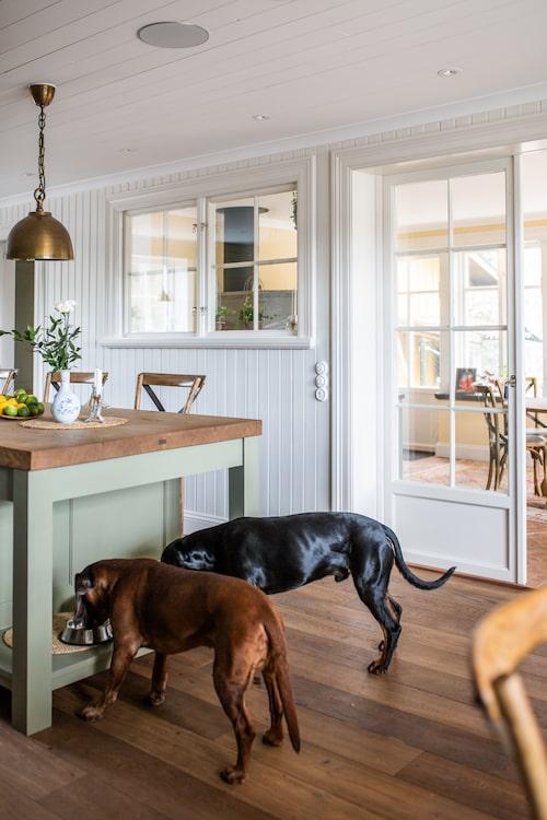 Hundarna Ajax och Zorro, 11 respektive 1 år, har fått en egen matplats köket.