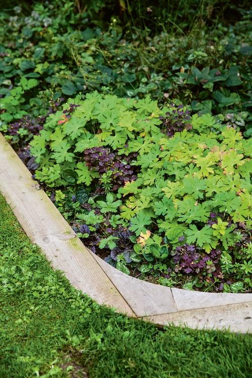 Rödbladig revsuga 'Atropurpurea', flocknäva, gulplister och mossflox.