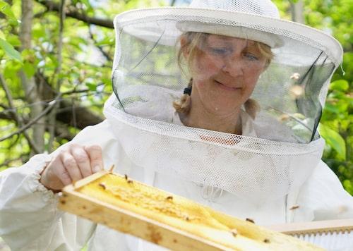 Lotta ser sina bin som små medarbetare.