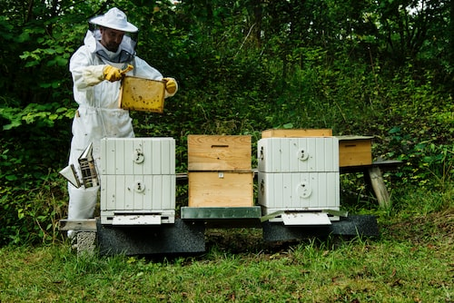 Bina pollinerar alla blommor så vi kan skörda frukter och grönsaker. Det mesta vi äter är tack vare att ett litet bi har varit där och bökat runt bland allt pollen