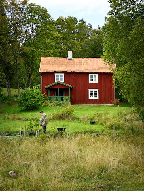 Nedanför gästhuset har Pluras dotter Lisa Jonsson en liten köksträdgård.