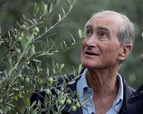 Fernando Di Luca tog olivoljan till Sverige.
