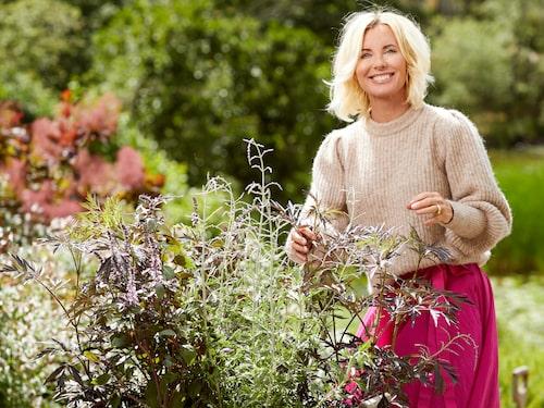 """I vår vill Victoria plantera växter som lockar till sig pollinerande insekter,   som bin. """"Basilika Yemenite blommar hela sommaren och blir en violett doftande buske i kruka. Jätteverbenan är ljuvlig om man önskar höjd och blommar ända in i   november. Stenkyndel är en perenn som doftar mint, med isblå blommor. """""""