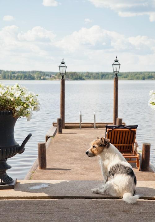 På bastuhusets brygga finns öppen spis och möjligheter att grilla. Hunden Wilson gillar att vara här – han älskar att bada.