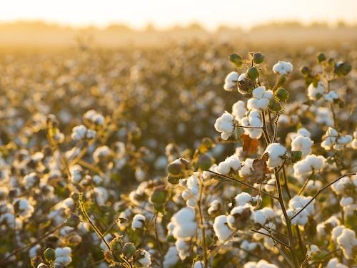Malaika Cotton använder fairtrade-bomull till sina kläder, som har krav på såväl kemikaliehantering som skäliga löner för odlare.