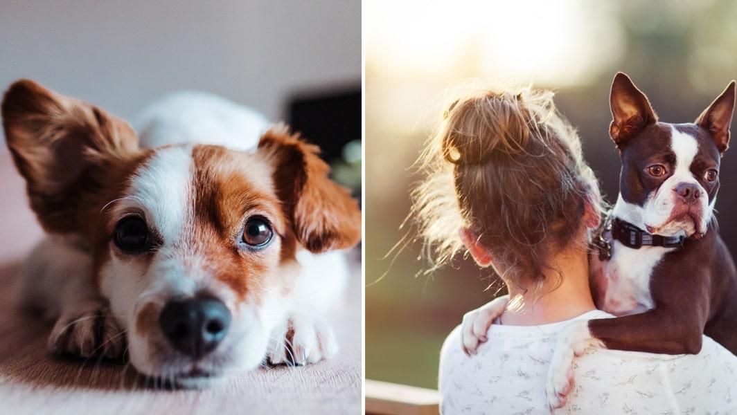 Sex med min hund