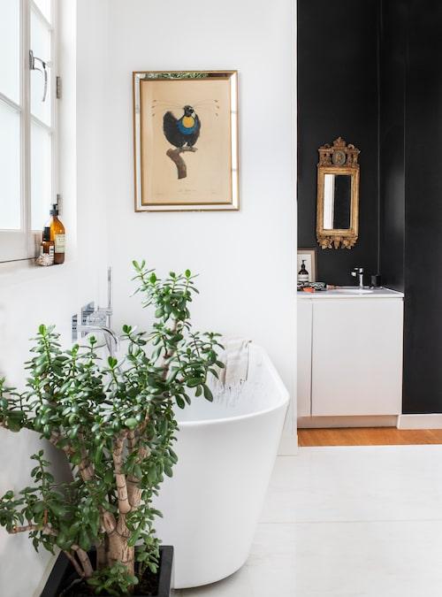 Det gamla badrummet och det gamla köket slogs ihop och blev ett rymligt badrum med både badkar och dusch. Men det går att dela av med en skjutdörr när det kommer gäster. Bortre delen med svarta väggar blir då en gästtoalett och besökarna kan inte kika in i själva badrummet. Jadeträdet höll på att dö och fick flytta in i badrummet för att få mer ljus