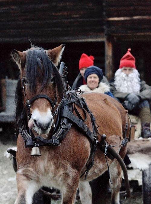 Åk häst och släde med tomten i Jämtland.