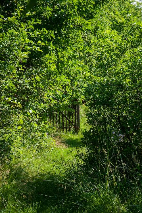 Ös på med det du gillar. Är det äng så kör på det, och klipp en stig. Kontrasten mellan klippt och högt gräs kan räcka för att skapa en anlagd känsla.