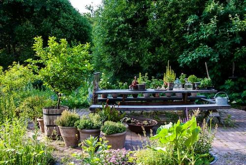 Använd krukor för att förstärka grönskan och göra så att trädgårdens sociala platser ser mer möblerade och etablerade ut. Och blir mysigare att vistas i.