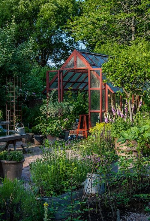Låt dina trädgårdsrum ramas in av grönska. Ta hjälp av både krukor och rabatter. Det krävs mer grönska än du tror för att skapa en inbjudande trädgård. Ta i från tårna så når du kanske halvvägs…