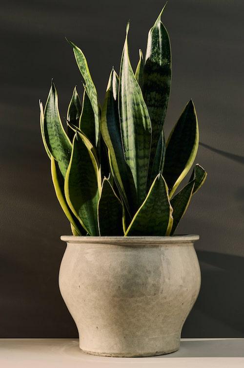 Ge dina växter gott om utrymme i en stor kruka från Ellos Home.