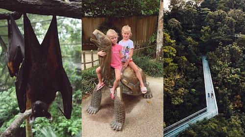 """""""Singapore Zoo"""" är en given dagsutflykt om man åker till Singapore med barn."""