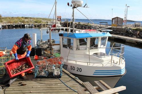 Nils-Åke Johander förbereder dagens hummerfiske med agn av bland annat krabba.