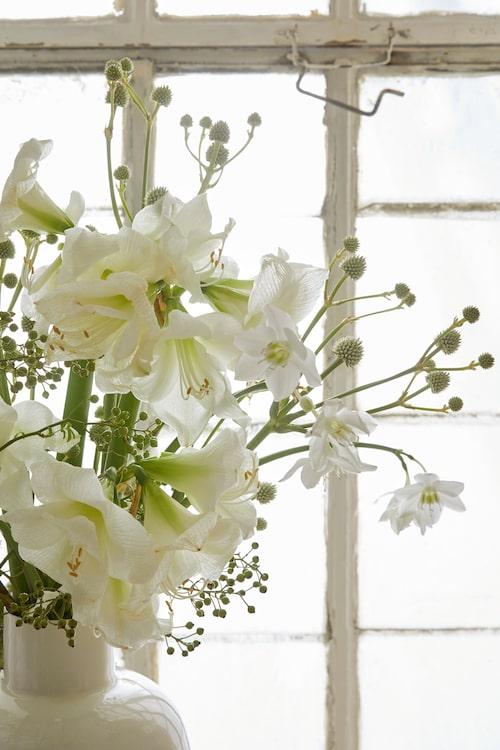Praktfull vit amaryllis i sällskap av amazonlilja och olika fröställningar.