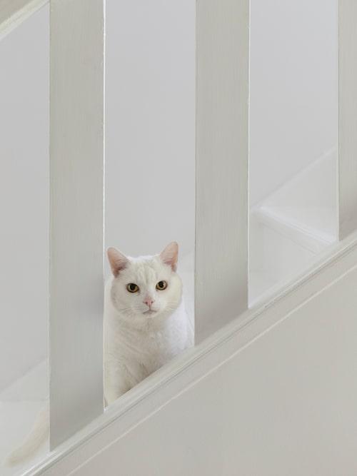 Katten Mogge vill vara med precis överallt, här på span i trappan.