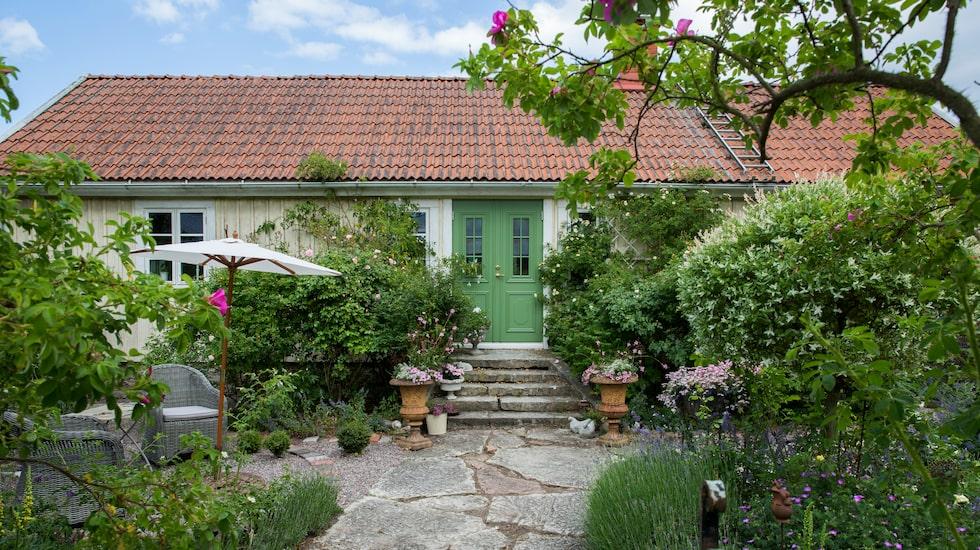 Kalksten, rosor och medelhavsväxter - vid entrén på framsidan återfinns många av Jeanettes trädgårdsfavoriter. Rosorna fick hon gulla med några år - sedan trivdes de.