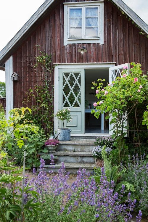 Med en trappa i ölandssten och återanvända pardörrar från en skola blir sommarrummets entré ett vackert blickfång. På trappan blommar en vit, uppstammad ros och olika sommarblommor i kruka. I förgrunden kantnepeta.