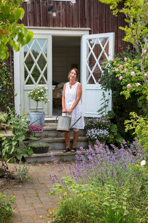 Jeanette älskar växter och medger att hon har svårt att motstå ett köp om hon kliver in i en handelsträdgård. Utanför sommarrummet blommar bland annat rosor och kantnepeta.