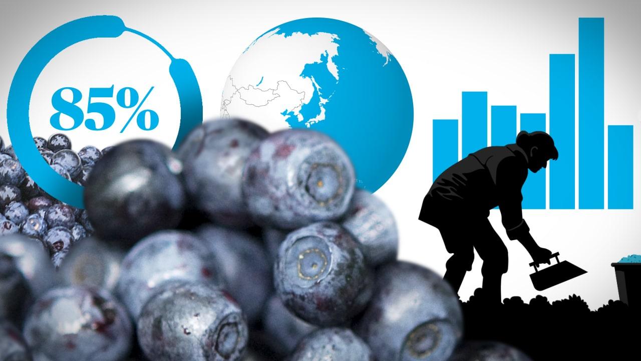vart växer blåbär
