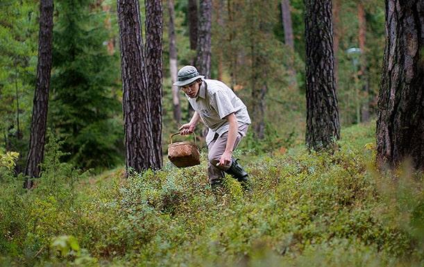 Skogen – ett rum för livet, där plockaren från norr går ensam för att leta svamp för eget bruk. I andra regioner plockas svampen av inhyrda grupper, för att sedan säljas till människor som själva aldrig skulle synas mellan träden.