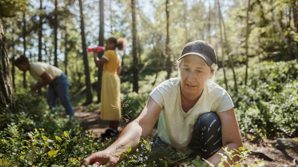 Nytt naturreservat i Hagsätra skapar grönt stråk i Söderort