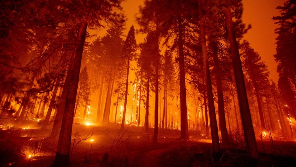 Caldorbranden väster om Sacramento.